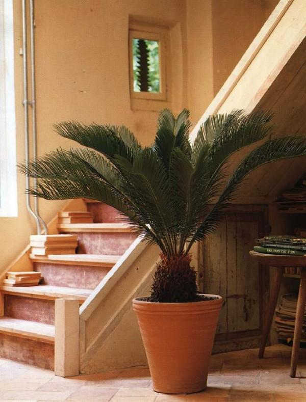 интересная пальма в оформлении холла