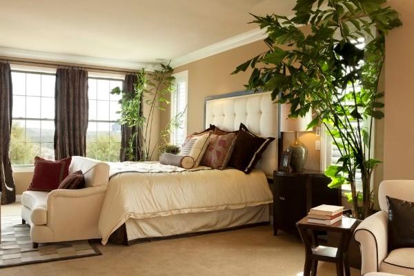 крупные растения в больших вазонах в спальне оформление растениями