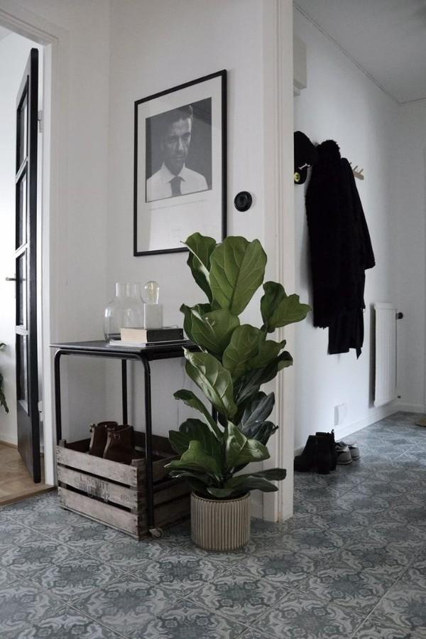 оформление интерьера прихожей напольное растение с широкими листами
