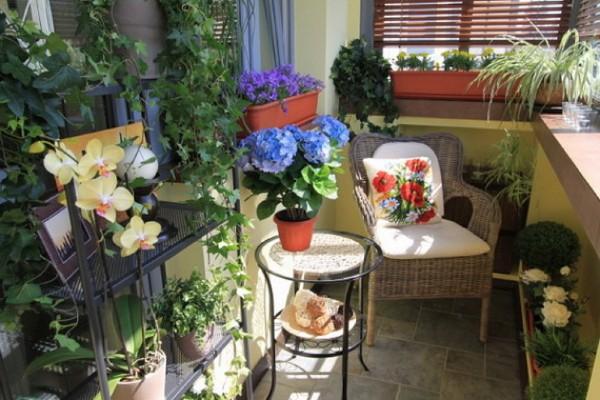 цветочная оранжерея дизайн маленького балкона