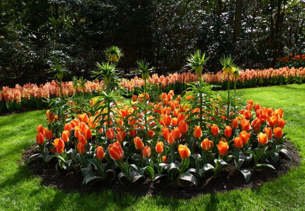 дизайн клумбы с тюльпанами