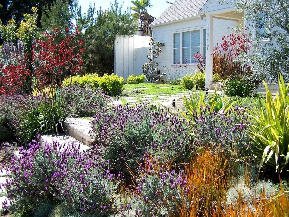 дизайн садового участка с неприхотливыми растениями