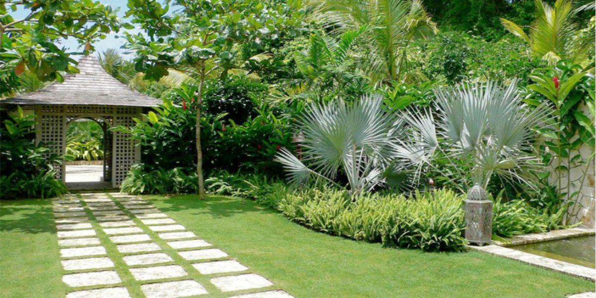 лёгкий дизайн садового участка с тропическими растениями
