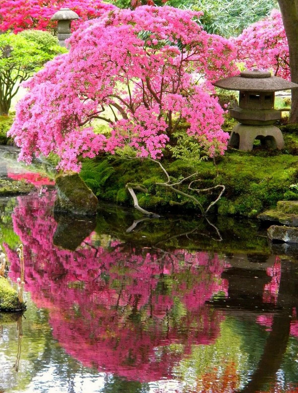 ландшафтный дизайн садового участка с сакурой