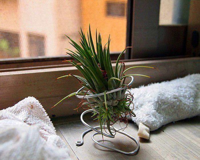 46. комнатные растения без горшка в интерьере