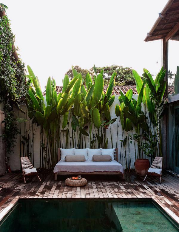 озеленение маленького двора частного дома пальмами