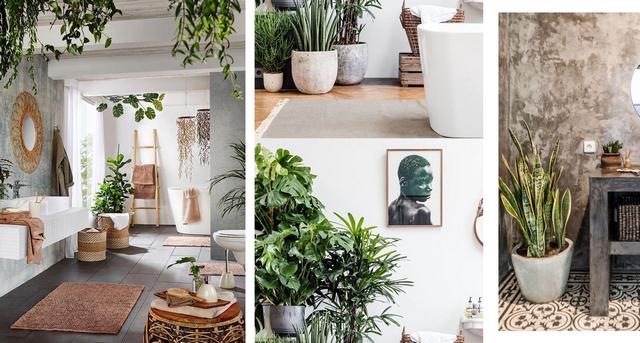 тренды дизайна интерьера 2021 комнатные растения