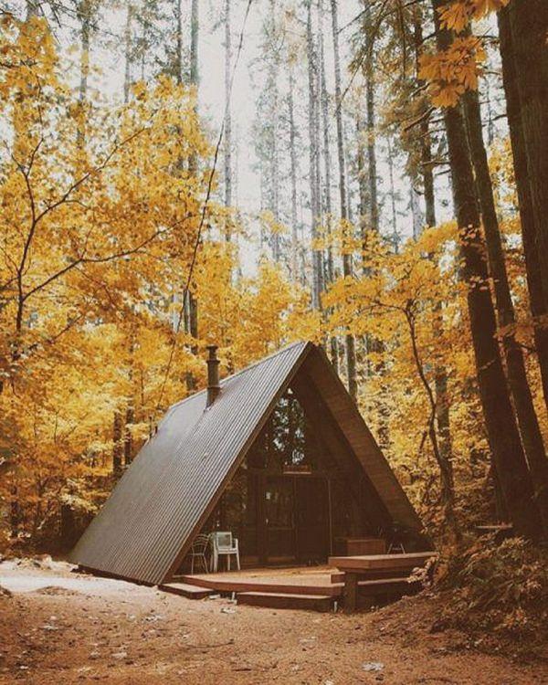 небольшие шале в лесу осенью
