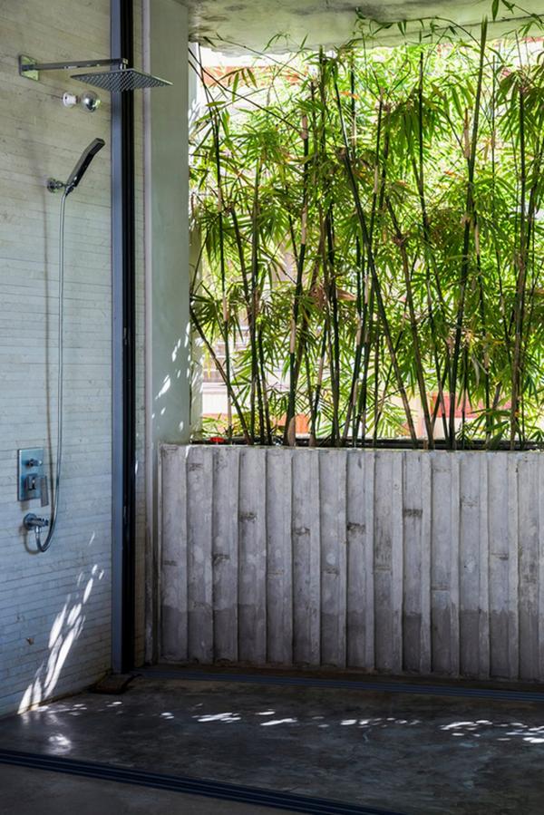 комнатный бамбук в интерьере фото