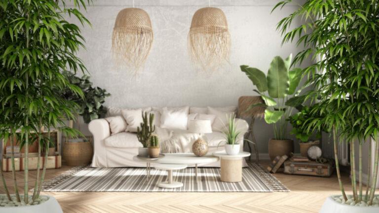 живой бамбук в интерьере